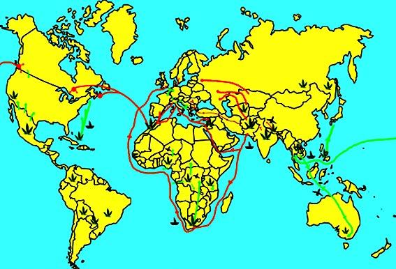 Weltkarte der Cannabis-Routen